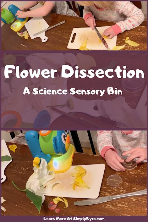 Do you have flowers hanging around that may wilt soon? Why not have some fun and have your kids dissect them. They can learn how flowers are formed, look up how they work, and have some sensory fun while they're at it!