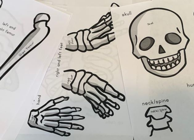Image shows the scattered stacked skeleton printouts including the skull, feet, hand, neck, and a femur bone. The printout has the name written beside each bone section, which was going to be cut off, so now each bone section is now labelled with a pen.
