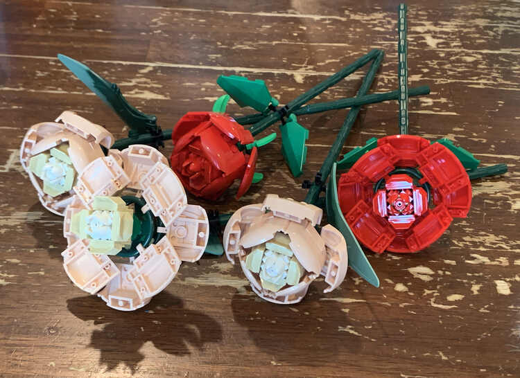 Image shows all five roses laid out on the table. Two of the beige and one red rose is closed while one of each color is fully open to better contrast the two types.