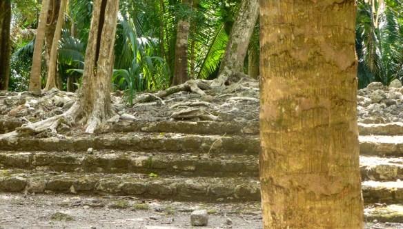 Mayan Ruins - Baby Sacrifices