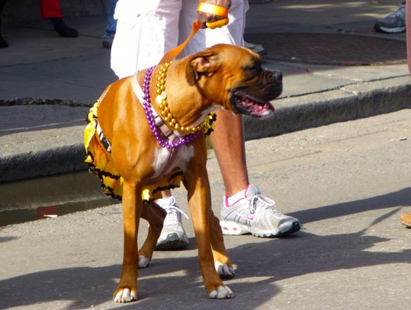 Dog, French Quarter, Louisiana
