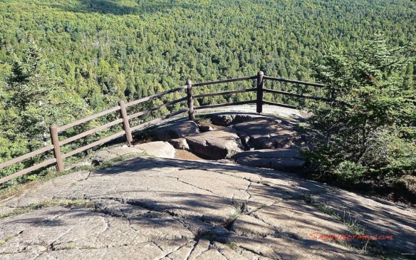 View on the Oberg Loop Trail