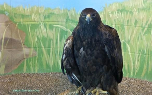 Donald, the eagle