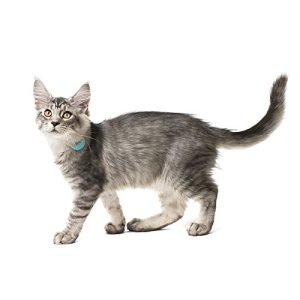 Buy the Loc8tor Pet Handheld Finder pet tracker for your pet or for a gift for pet owners.