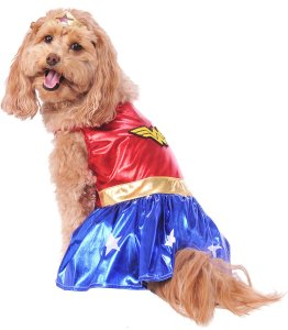 Adorable dog dressed in the DC Comics Wonder Woman Pet costume.