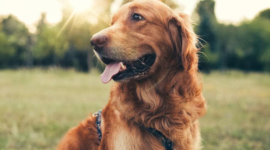 CBD Oil for Dog Seizures and Epilepsy