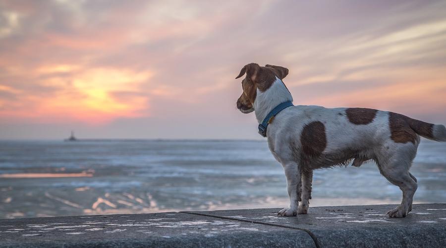 CBD Oil for Dogs with [CANCER] Top Cannabis Hemp Oil Canine