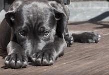 CBD Oil for Loss of Appetite in Dogs