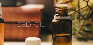 Can CBD Oil Calm Your Anxious Dog