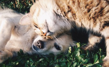 How CBD Oil Can Help Your Pet's Anxiety