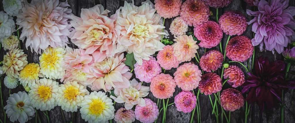 Melissa's Beautiful Garden