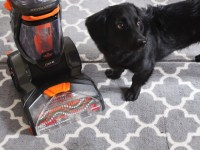 Best Vacuum For Pet Hair On Carpet - Carpet Vidalondon