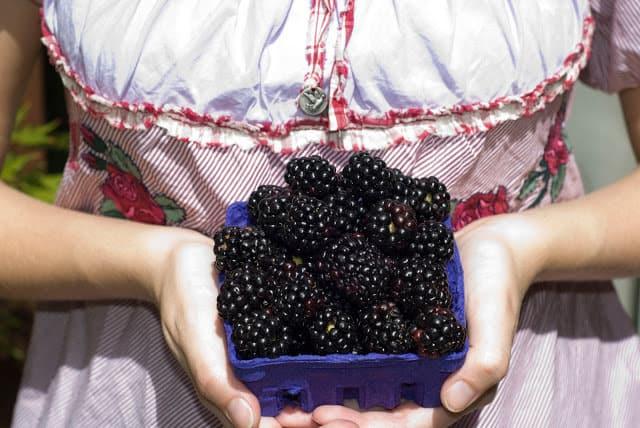 girl holding purple cup of blackberries in hands