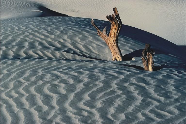 dead tree+sanddune2