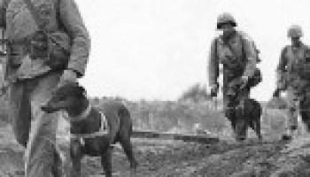 Dobermans go to War  | SimplySOLD