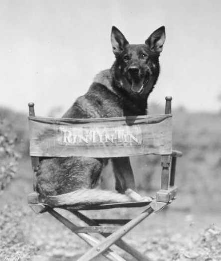 Rin Tin Tin, Part 2.