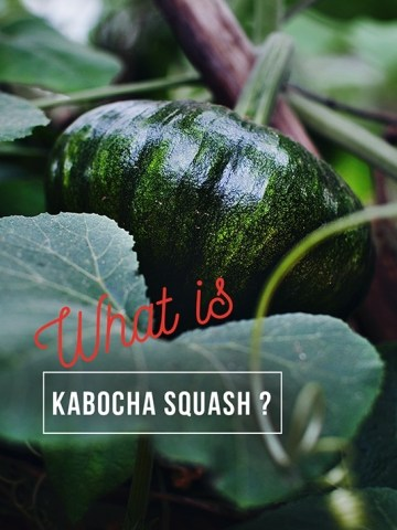 What is Kabocha squash