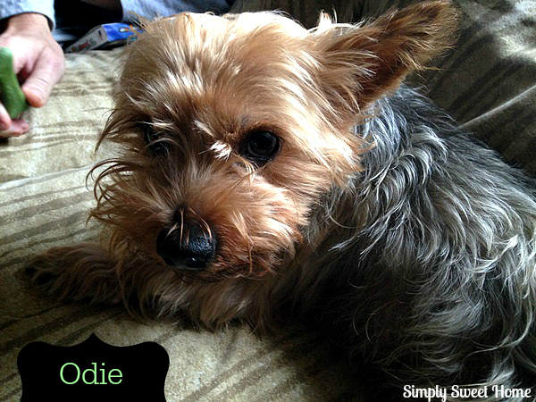 Odie with Minties