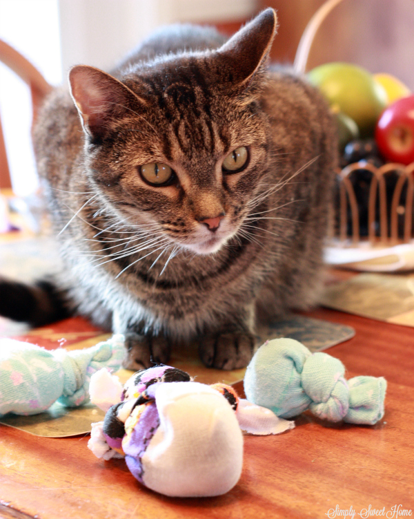 Rebel cat with toys