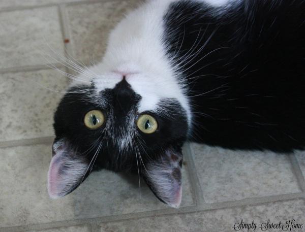 mina-cat