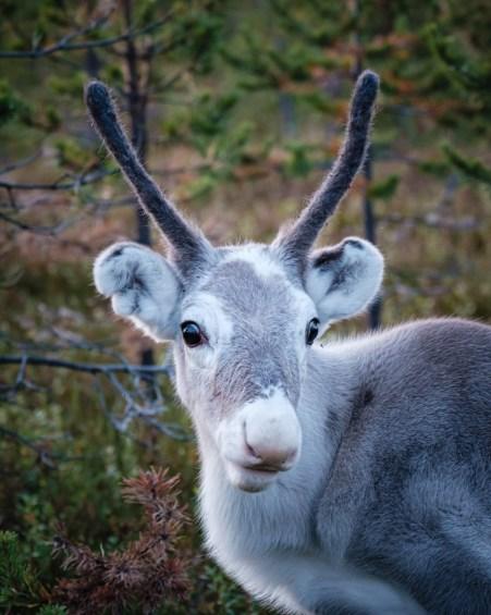 Inari, Laponie, Finlande