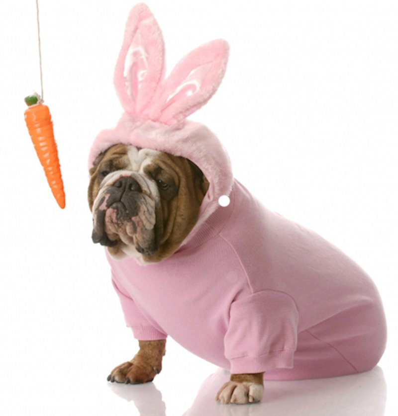 10 Adorable Dogs And Cats In Easter Costumes