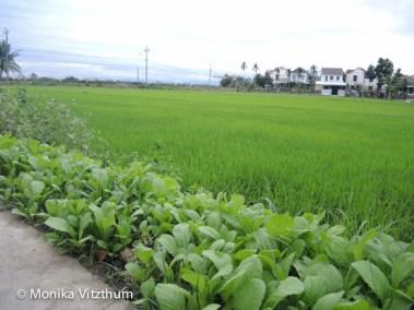 Vietnam_2020_Hoi_An-6617