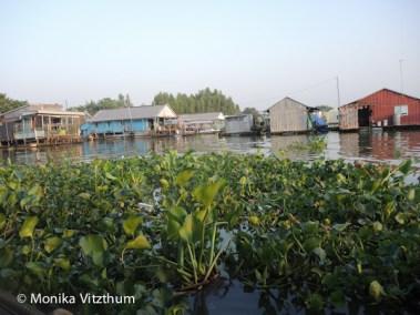 Vietnam_2020_Mekongdelta_2020-6048