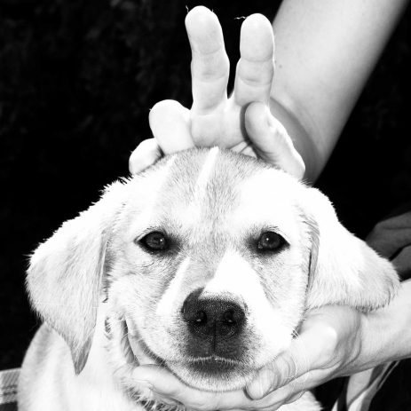 Fotos von Hunden, Katzen, Pferde oder anderen Lieblingen