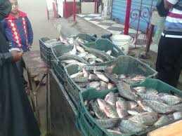 مستقبل وطن :يقيم عدة منافذ لبيع الأسماك والسلع الغذائية بأسعار مخفضة بجنوب سيناء