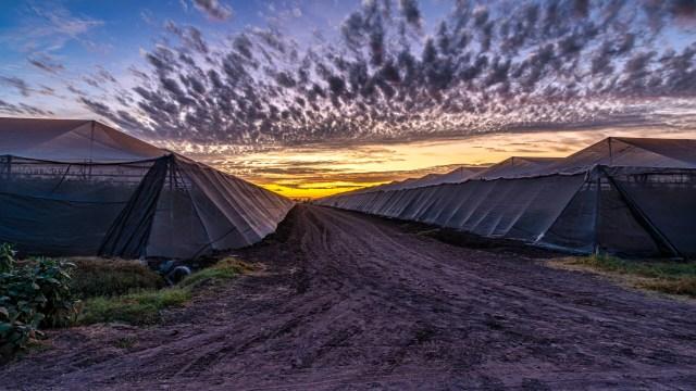 Amanecer en el campo donde se encuentran los invernaderos de la Agrícola Behler