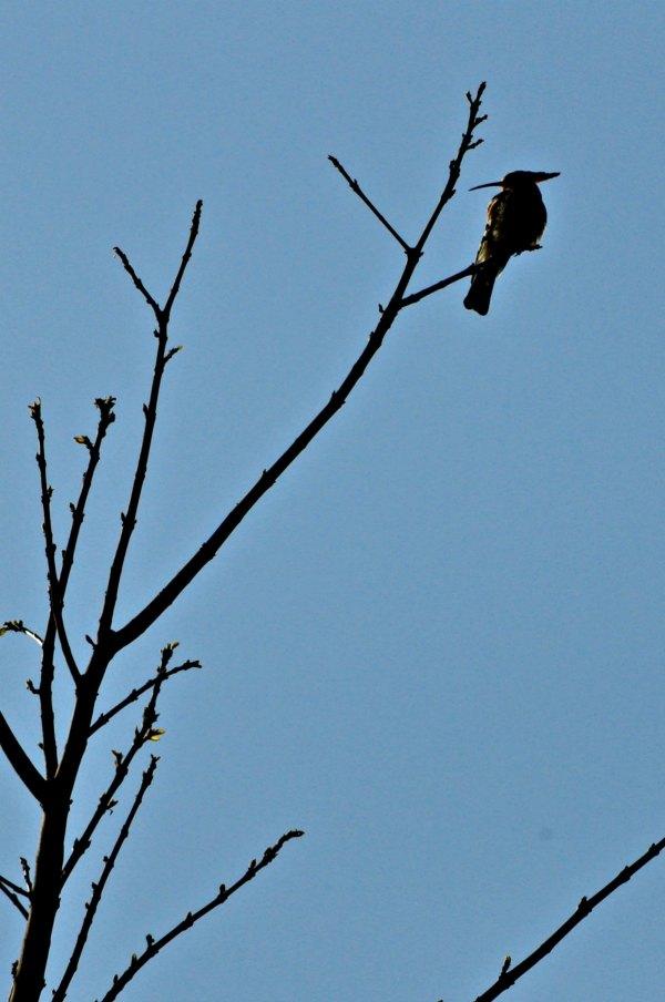 Corbett Birds