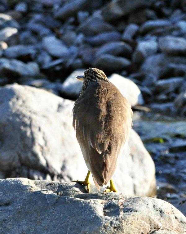 Eagle corbett