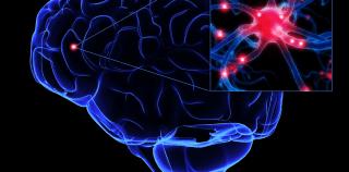 İnsan Sinir Sistemi-1