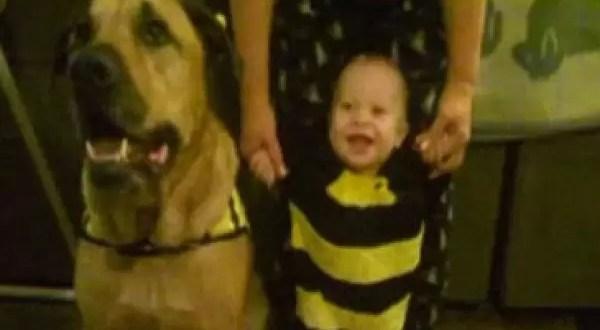 Un perro mata a niño de un año durante su cumpleaños