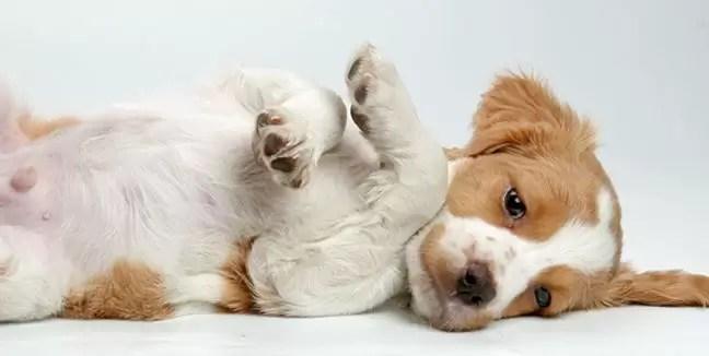 Ventajas y beneficios de tener un perro