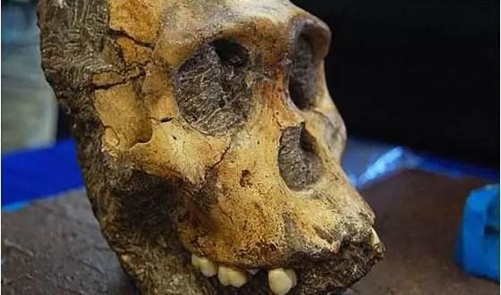 ¿Qué comían nuestros ancestros?