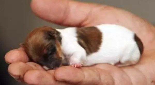 Fotos: La perrita mas pequeña del mundo