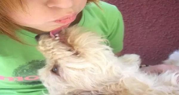 ¿Los perros reconocen la tristeza humana?