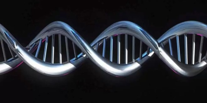 Recuperan parte del genoma de cazadores de hace 7.000 años