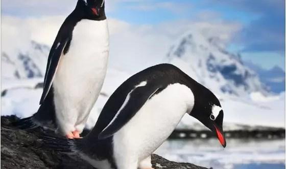 La perversión de los pingüinos durante el acto sexual