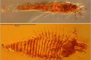 Encuentran insectos fosilizados de la Era de los dinosaurios
