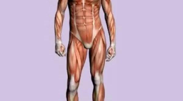 Conoce las partes del cuerpo totalmente inútiles