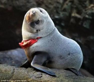 Fotos: Una foca casi muere ahorcada por una colaless