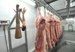 Abren una carnicería temporal de partes humanas