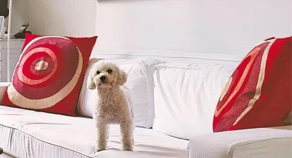 Cómo limpiar tu casa si tienes una mascota
