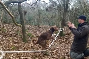 Video asombroso: Perro acróbata hace equilibrio en una soga