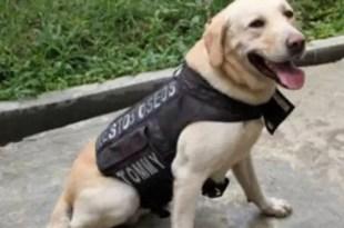 Insólito: Narcos amenazan de muerte a un perro