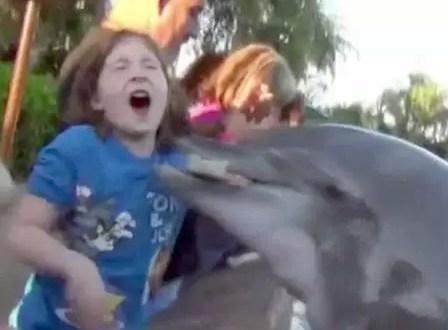 Delfín de SeaWorld ataca a una niña - Video