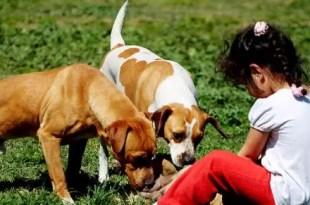 ¿Los perros son capaces de sentir el dolor de las personas?